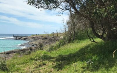 Gantry Historical Walk at Bawley Point Headland